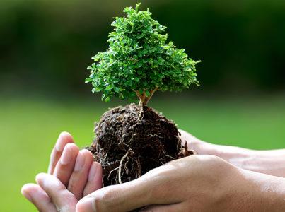 Tu BiShvat (Año nuevo de los árboles)